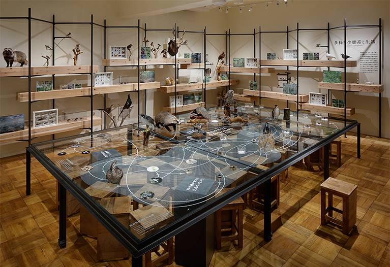 ふじのくに地球環境史ミュージアム 写真