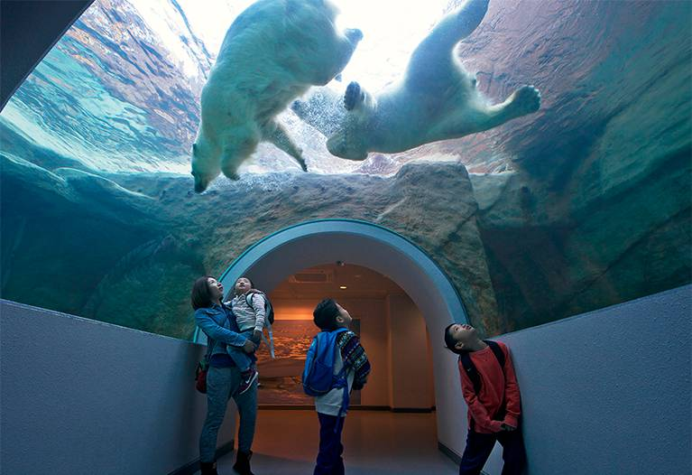 日本平動物園 写真
